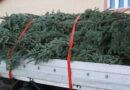 Transport ilegal de brazi de Crăciun