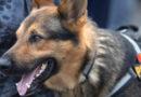 IPJ Neamț scoate la concurs 6 posturi din sursă externă pentru Poliţia Protecţia Animalelor