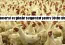 Atenție! Se suspendă comerțul cu păsări vii în Piatra Neamț