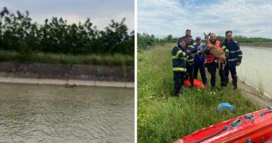 Pui de căprioară căzut în canalul Bistrița, salvat de pompierii nemțeni